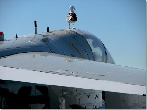 Sea Gull A-7
